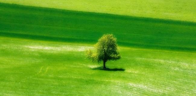 green tree happy